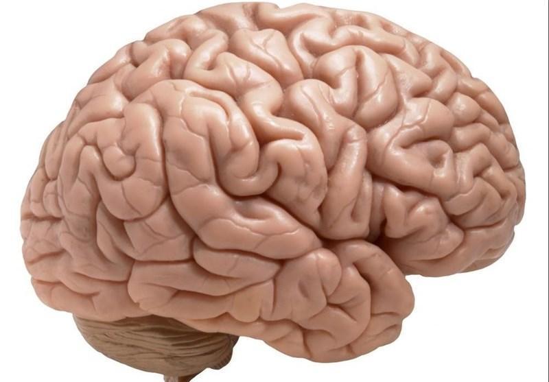 مغز جنسیت را با لب و پوست تشخیص می دهد