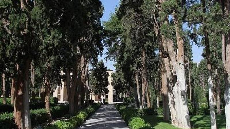 باغ فین و موضوع درختان کهن سال